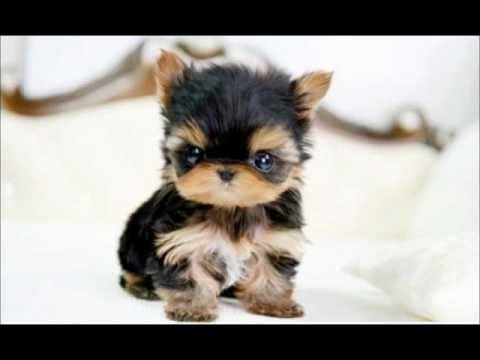 cutest dog baby pictures top 10