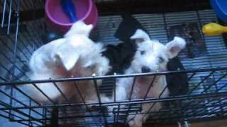 Puppies - Watch These Puppies Bounce Like Bunnies!