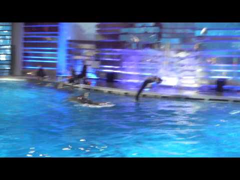 Дельфинарий в Клайпеде - Видео онлайн