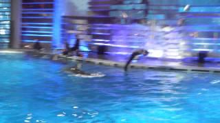 Дельфинарий в Клайпеде