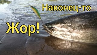 Бешеный жор лосося Горбуша с симой Ловля на спиннинг Сахалинская рыбалка Sakhalin fishing