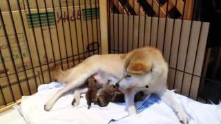 3頭目の女の子が時間を空けて無事に産まれました!! 病院のエコー検査...
