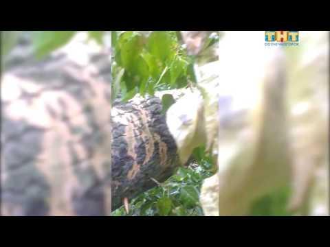В Поваровке на жилой дом упало дерево