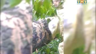В Поваровке на жилой дом упало дерево(, 2016-07-20T18:07:11.000Z)