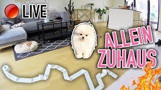 WELPE ALLEIN ZUHAUS - Das macht SCOOPS, wenn er ALLEINE ist | Sonny Loops