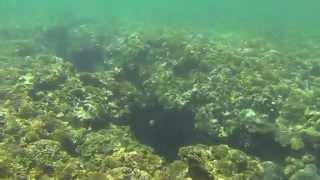 Филиппины отдых на пляжу у моря. Кораллы Дайвинг, Снорклинг. Подводный мир в райском уголке 2015 ч 9(Филиппины отдых на пляжу у моря. Кораллы Дайвинг, Снорклинг. Подводный мир в райском уголке ▻ Мой видео..., 2015-05-10T12:55:46.000Z)