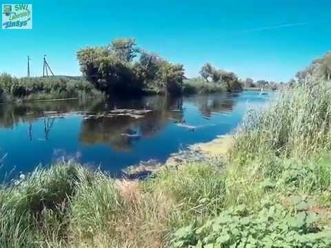 Инфо ЛУГА — информационный сайт города Луга