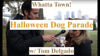 Whatta Town! - Halloween Dog Parade