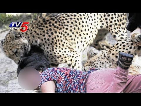 Cheetah Attack On Villagers   Woman In Critical Stage, 7 Injured   TV5 News