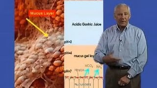 Stanley Falkow (Stanford University) Part 2: Helicobacter pylori and Gastric Cancer