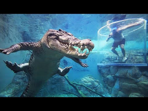 CAGE OF DEATH - Australian Tourist Attraction Swimming With Crocodiles