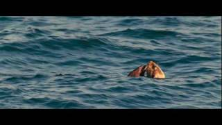 Oceans - Otters