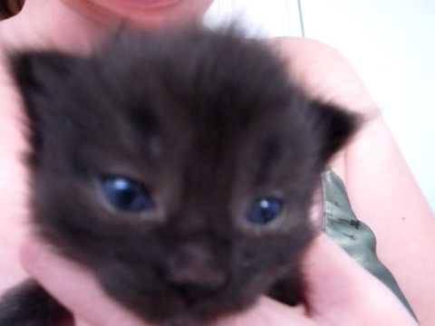 Kitten Has Funny Meow
