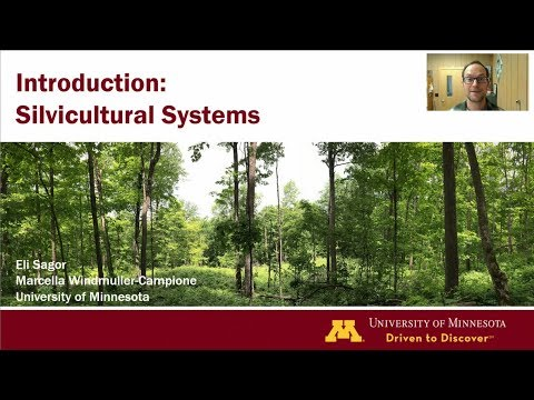 Silvicultural systems