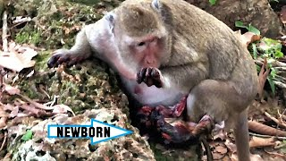 Download lagu THIS IS REAL NOT FAKE - HAVE YOU EVER SEEN MONKEY GIVING BIRTH? THIS MEMORY IS KEEPING IN OUR HEART.