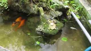 DIY Bể lắng cặn cho hồ cá ngoài trời