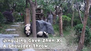 Jing Jing Gave Zhen Xi A Shoulder Throw And That Scared Her To Ran Away | iPanda