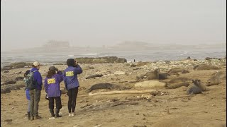 Año Nuevo Reserve: A Living Laboratory For Ocean Health