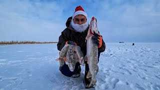 Новогодняя Рыбалка в Заповеднике! Коргалжыно! Озеро Есей! Казахстан!