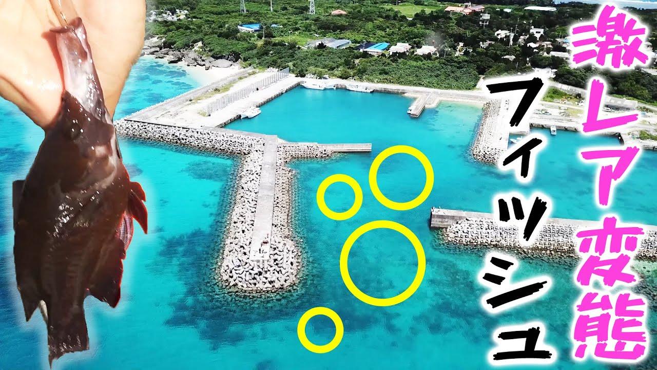 【閲覧注意】島の漁港で釣れる『激レア変態フィッシュ』の正体【久高島遠征2021夏 #1】