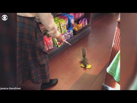 This Squirrel Stole Candy From Disney World!