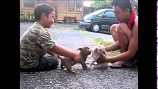 Aloha oe my doguie dog friends!!