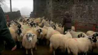 Lambing Live 2011 - Episode 3