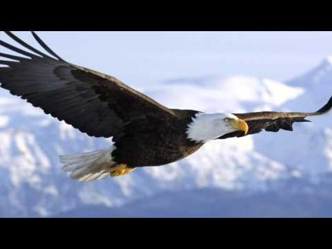 The Eagle Song