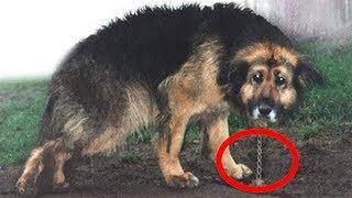 10 Yıldır Zincire Bağlı Olan Köpek Serbest Bırakıldığında Bakın Ne Oldu