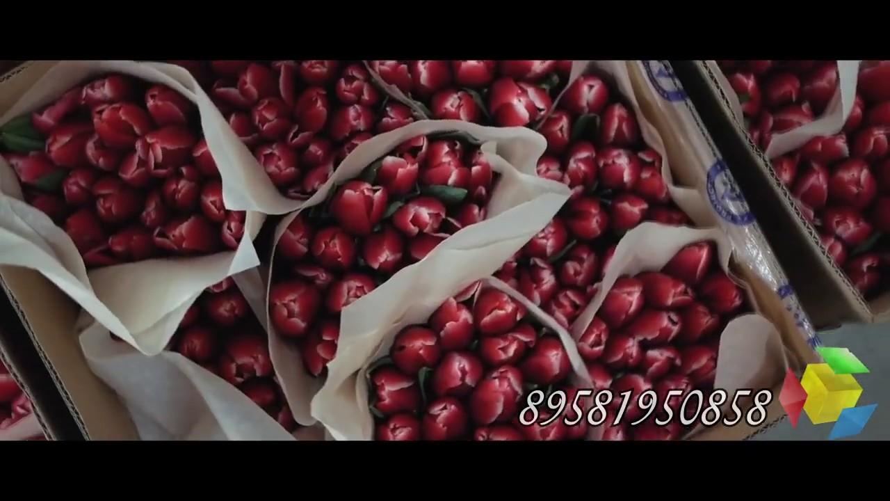 купить тюльпаны оптом с теплиц