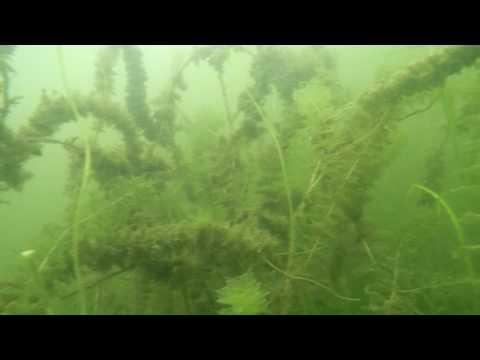 Snail Lake, Ramsey Co Zebra Mussel Inspection 9 4 16