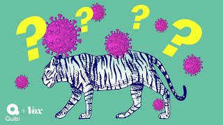 Why tigers get coronavirus but your dog will be fine