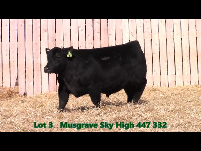 Musgrave Angus Lot 3
