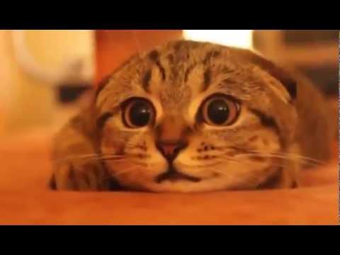 Коты ужасы фото