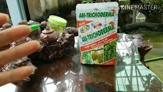 Sử dụngTrichoderma và dịch hoa quả thay thế phân hóa hoc bón cho phong lan