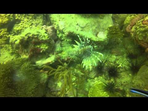 Marine Ecology 2015