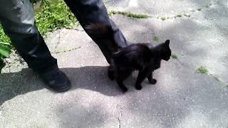 Молодая чёрная кошка на улице подошла к ногам мужика и начала беспрестанно тереться об его ботинки
