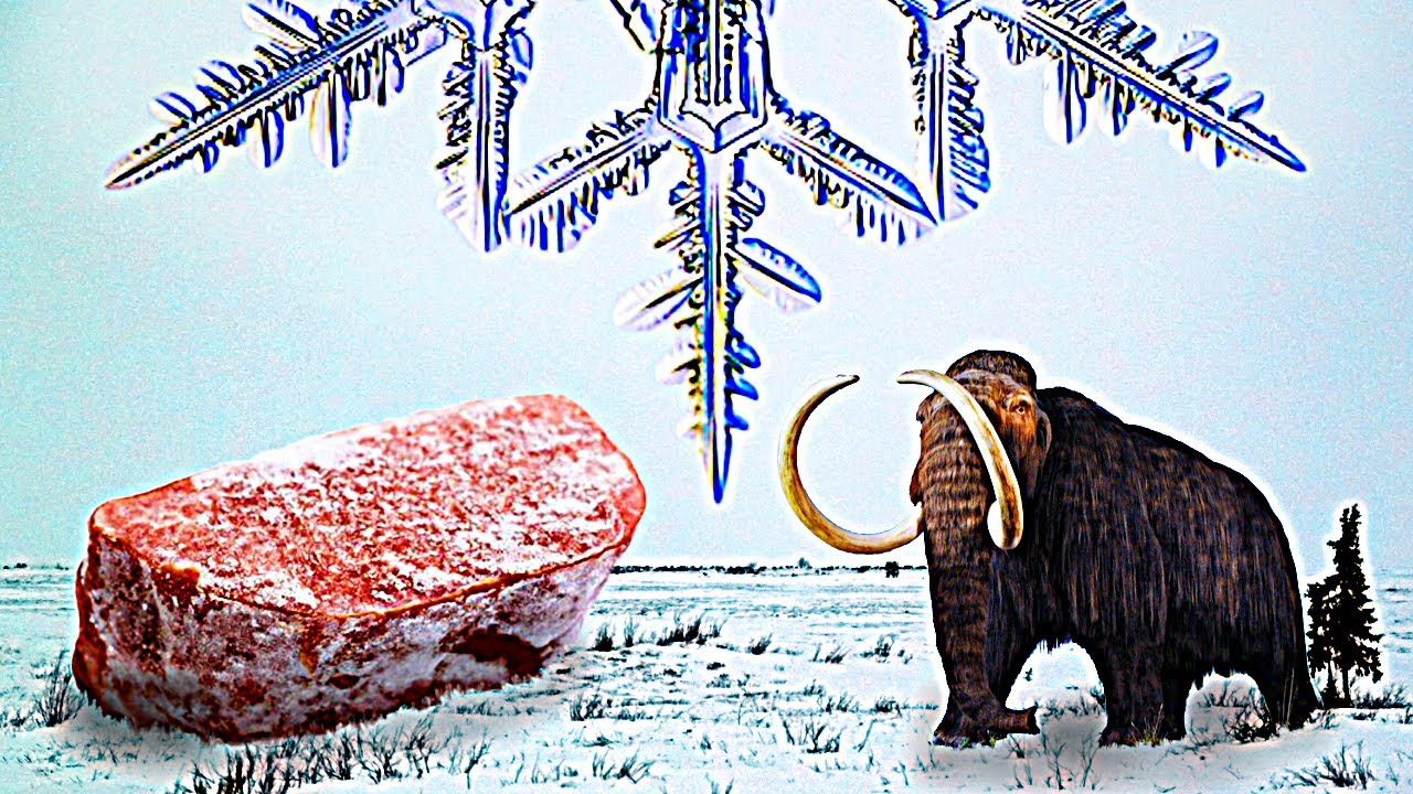 The Story of Frozen Food