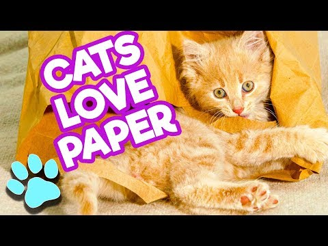 Cats LOVE Paper | Funny Cats Compilation | #thatpetlife