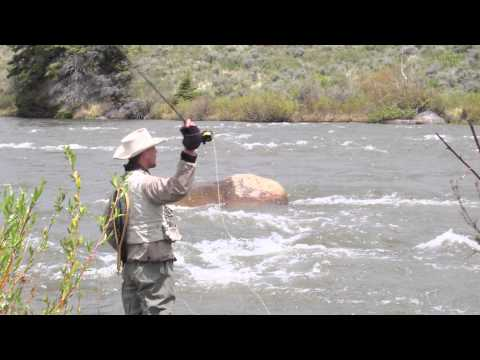 Wyoming Trout