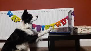 Rory the Border Collie  Birthday Party  amazing dog tricks
