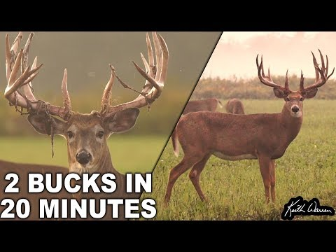 Two Trophy Whitetail Bucks In 20 Minutes | Legends Ranch