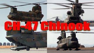 JGSDF CH-47 Chinook 陸上自衛隊木更津駐屯地 [Please Subscribe!!!] チ...