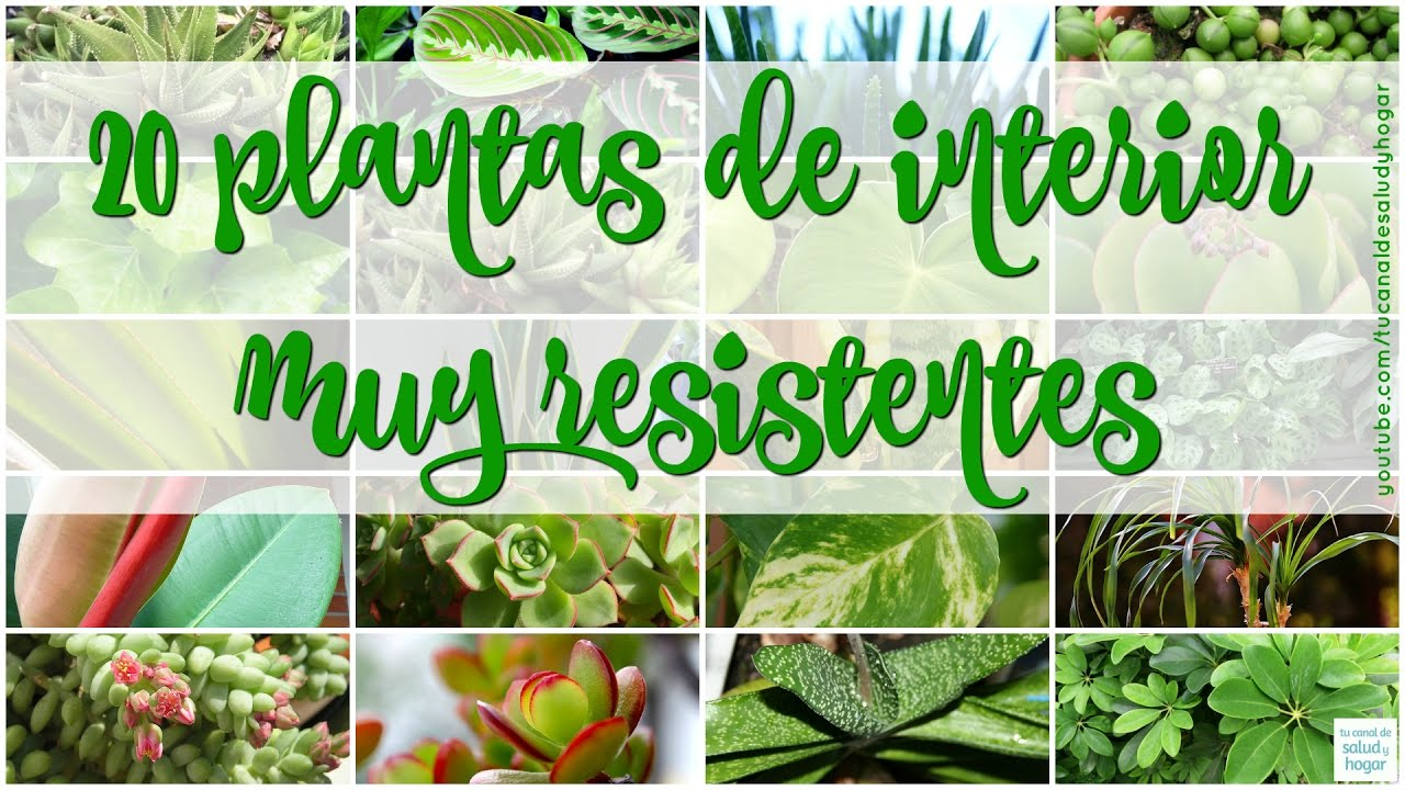 20 plantas de interior resistentes youtube for Plantas de interior para poca luz