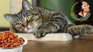 Сколько корма нужно кошке в день? Как часто кормить кошку?