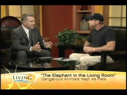 the elephant in the living room 2011 vidimovie