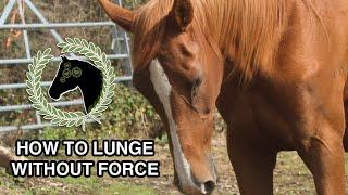 How to lunge a horse without force | Clicker training
