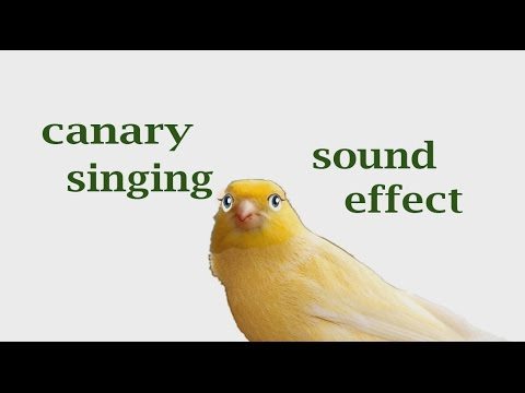 canary effect The movie was very sad the canary effect shows everyone who watches it how bad the conditions the native american indians have had for life recently on the reservations, the funds for their water supply was cut so now all they.