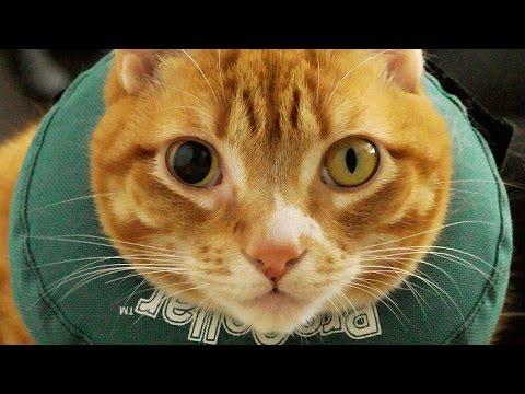 Cat Scratches Eye