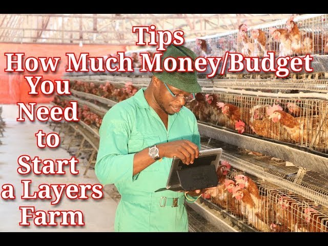Tips on How much Money/Budget You Need To Start a Layers Farm